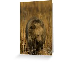 Grizzly Cub-Signed-#5126 Greeting Card