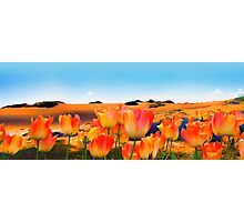 East Meets West, vibrant sand dunes and tulips Photographic Print