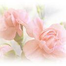 Soft Carnations by shalisa