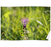 Il fiore dei Malaspina Poster