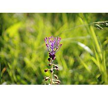 Il fiore dei Malaspina Photographic Print