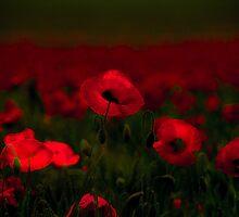Poppy fields 5 by x- pose