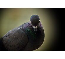 shy pigeon Photographic Print