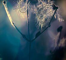 Colour of light by Jocelyn  Parry-Jones