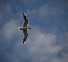 Freedom by mariocassar