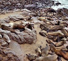 South African Fur Seal Colony by Carole-Anne