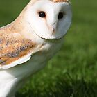 Portrait of a Barn Owl by Michael G Devereux