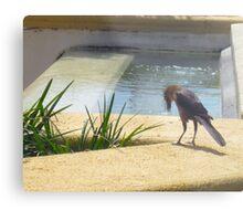 Velociraptor Bird Metal Print