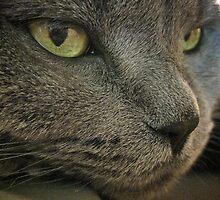 Mia The Cat by L.D. Bonner