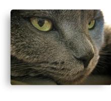 Mia The Cat Canvas Print