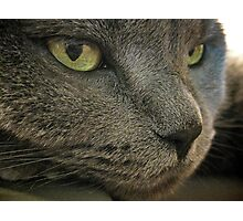 Mia The Cat Photographic Print