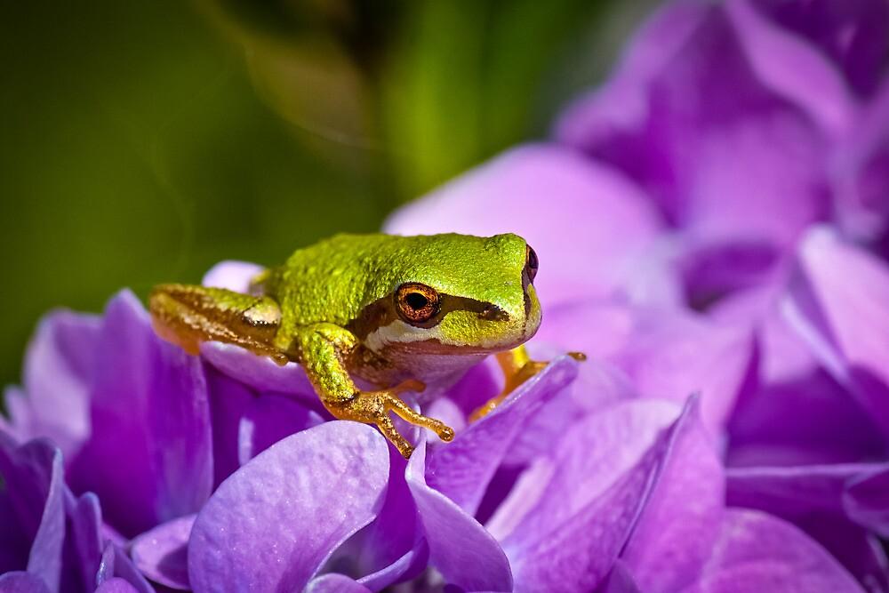LITTLE GREEN FROG by Sandy Stewart