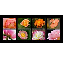 Collage of 8 pink and orange flowers Photographic Print