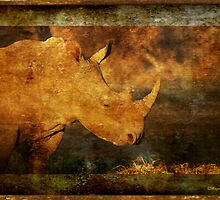 IN GRUNGE - DOOMED FOR EXTINCTION? - WHITE RHINOCEROS*- Ceratotherium simum  by Magaret Meintjes