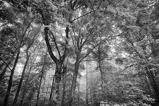 Seeing the trees for the forest by alan shapiro