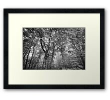 Seeing the trees for the forest Framed Print