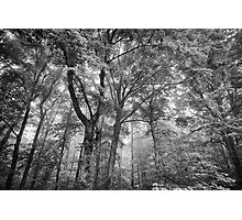 Seeing the trees for the forest Photographic Print