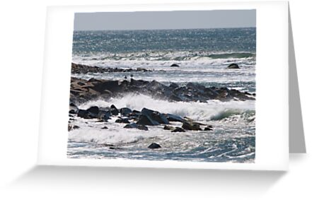 Gulls amid the Spray by Barry Doherty