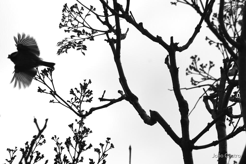 Birdie please don't go! 0656 by João Castro