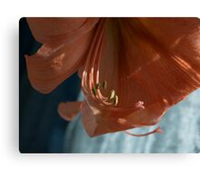 Amaryllis Up Close Canvas Print