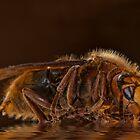Reflexion d'un hornet by Sheila Laurens