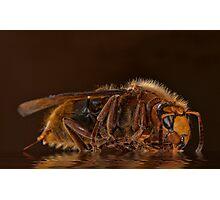 Reflexion d'un hornet Photographic Print