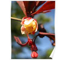 shrub blossom  Poster