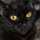 Salem  by Rebecca Bryson