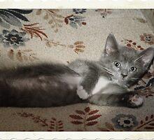 Centerfold Kitty by vigor