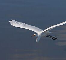 Egret in Flight by Ian Robertson