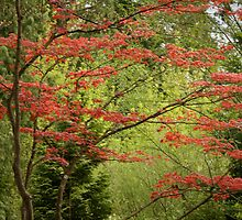 Red Tree by Abby Lewtas