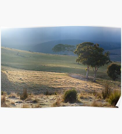 Morning Sun, Omeo. Poster