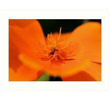 Poppy Orange Art Print