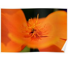 Poppy Orange Poster