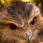 Tawny Frogmouth by Brett Rogers