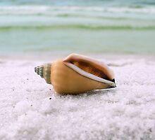 She Sells Seashells by MeParadise