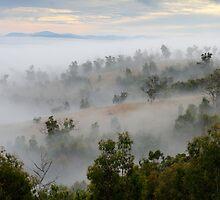 Omeo Fog by Julia Nance