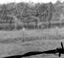 Wet Chilly Web by LadyEloise
