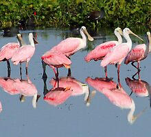 Reflections in pink! by jozi1