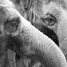 Elephants by Christopher Herrfurth