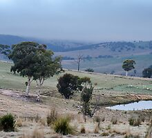 Mornings, Omeo. by Julia Nance