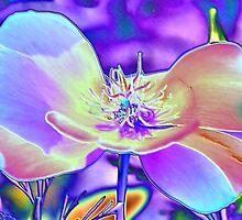 Colored Foil Poppy by aprilann
