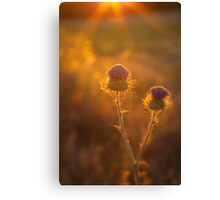 Catching Rays Canvas Print