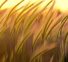 SunSway by Bob Larson