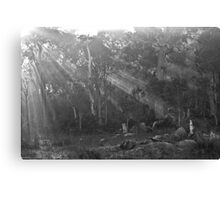 Sunrays in the Mist - Black and White Canvas Print