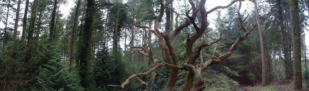 Dead Tree by cadellin