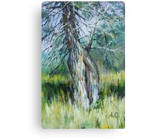 By the Spring Canvas Print