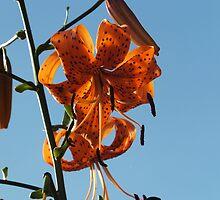 Orange Flower by Amanda Bentley Graphic Design & Photography