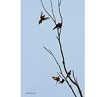 Lorikeets Photographic Print