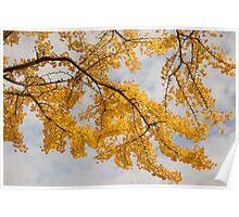 Ginkgo Autumn Poster